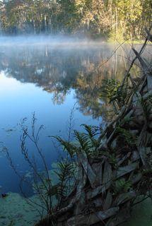 Silver River 7 4x6 crop
