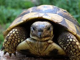 Turtle stressed