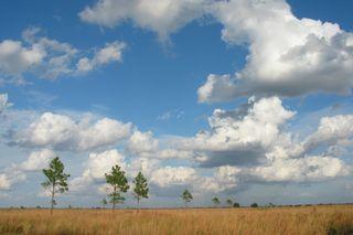 Kissimmee Prairie Preserve by Sandra Gail Lambert